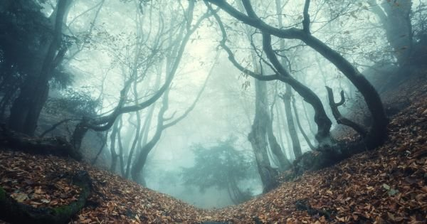 Trail through a mysterious dark old forest in fog.