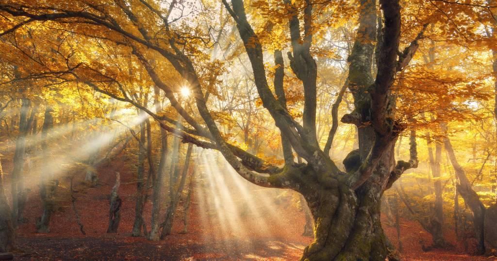 Natur, Mythen und Folklore